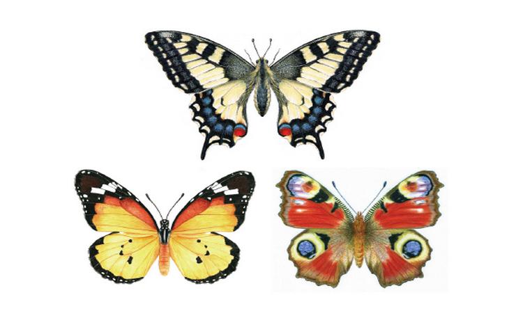 Exposição | Lepidópteros
